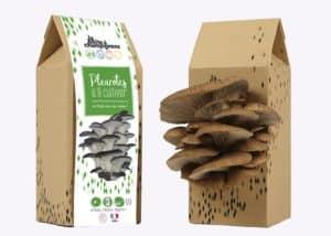 pleurotes champignons made in france MIF cadeaux responsables sens éthique